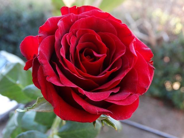Gambar Florist