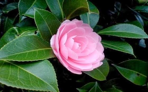 Bunga Paling Langka