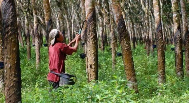 sumber daya alam hutan